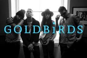 Goldbirds-800